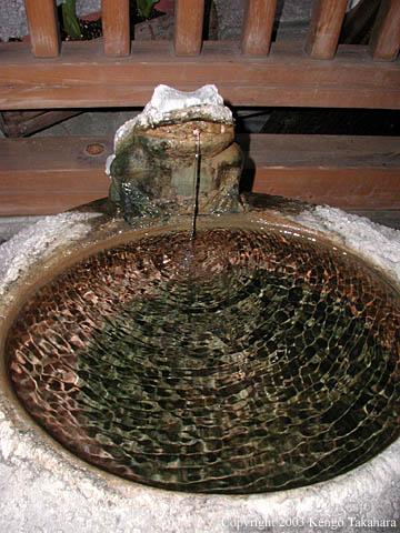 飲温泉場のカエル