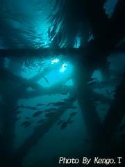 2005.08.31(15:19) 西オーストラリア エクスマウス ピアダイブ
