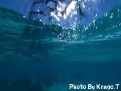 2005.09.03(12:27) 海の中(西オーストラリア コーラルベイでシュノーケル)