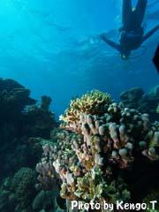2005.09.03(14:50) 海の中(西オーストラリア コーラルベイ ザ・キャニオン)